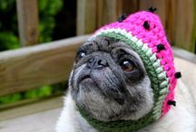 Welcome to Pug Town! Population: All of the Pugs! / Pugs, pugs, and more pugs / by Laura Gueret