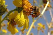 Allergies (home remedies) / by Karen Rickel