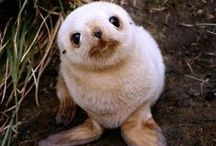 Fuzzy and cute / Cute animals on Pinterest!