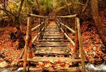 Fall / by Jennifer Stovall