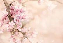 ღ.¸¸.✿❤Rosados - Pink / by Elisabeth  ღ.¸¸.✿❤