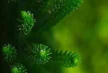 ღ.¸¸.✿❤Verde - Green / by Elisabeth  ღ.¸¸.✿❤