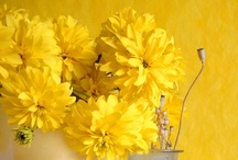 ღ.¸¸.✿❤Amarillo - Yellow / by Elisabeth  ღ.¸¸.✿❤