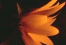 ღ.¸¸.✿❤Naranja negra - Orange and black / by Elisabeth  ღ.¸¸.✿❤