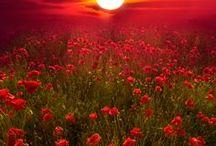 ღ.¸¸.✿❤Verde y rojo - Green and red / by Elisabeth  ღ.¸¸.✿❤