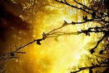 ღ.¸¸.✿❤Negro sol - Yellow and black / by Elisabeth  ღ.¸¸.✿❤