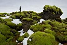 untouched wonder: nature nature