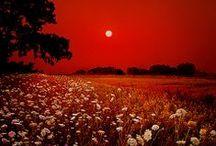 ღ.¸¸.✿❤Rojo, blanco y negro !!! Red, white and black / by Elisabeth  ღ.¸¸.✿❤