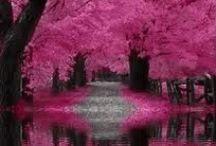 ღ.¸¸.✿❤Rosas negras - Pink and black / by Elisabeth  ღ.¸¸.✿❤