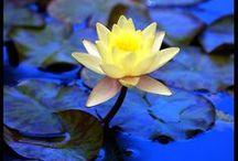 ღ.¸¸.✿❤Azul y amarillo - blue and yellow / by Elisabeth  ღ.¸¸.✿❤