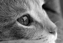 Cats / Gatos