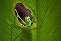 Animalia / Beautiful photos of beautiful creatures.