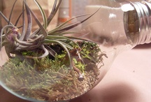 Terrarium Inspiration / Spark your creativity for terrariums and create your own beautiful terrarium for your home. Here are some of our inspirations...