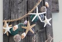 Shells, Coral & Starfish