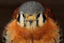 Olha o passarinho !: Birds