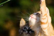 Hai Kitteh / Kitties