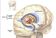 Parkinson's Disease / Parkinson's Disease - Occupational & Physical Therapy