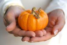 Photography {Pumpkin Patch} / Photography in a pumpkin patch.  Pumpkins, hayrides, family, babies, etc.
