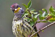 BRAZILIAN Birds  - Pics I´ve done  / Birds from Brazil