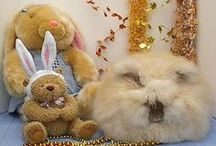 Rabbits are not rodents. / Rabbits are lagomorphs. My special love is the English Angora rabbit.