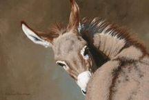 Anne pour les ânes