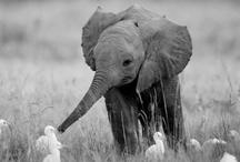 Elephants / by Kara Stans