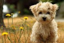 Cute Animals / by Meggie Soehl