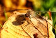 Dragonfly love / by maaike amstelveen