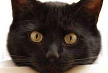feline favourites / by Julia Wykes