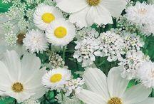 FLOWERS / by Ozden Richter