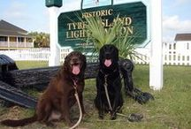 Four-Legged Guests at Tybee Vacation Rentals