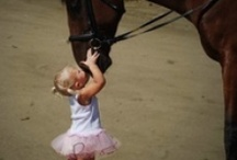 Horses are Special