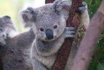 Australia  / Visiting Australia