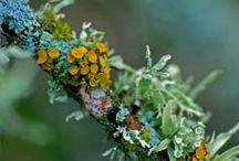 Moss...Lichen...Fungus
