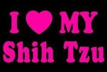 Shiz Tzu's
