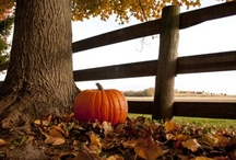 ~ Autumn Gatherings Love ~ / ~ Autumn is my favorite time of year...there's nothing like pumpkins, mums, and scarecrows adorned with all of the beautiful colors, and gathering for Thanksgiving with all of my loved ones ~ / by Misty Dennie