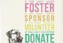 Volunteering/Nonprofit / Inspirational quotes  - Promoting Literacy - Adopt Don't Shop Movement  - Mentoring - Voluntarism - Junior League  • ALSO ideas for backdrops for animal shelter photos and examples of animal shelter photos I have completed