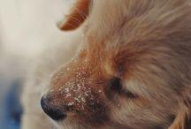 Dogs / by Caroline Lawley