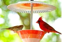 Birds and Butterflies / Birds, owls, and butterflies. Obsessions, much. http://www.genuinekentucky.com/birds / by Joi Sigers