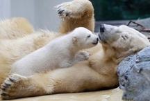 Polar Bears / by Joi Sigers