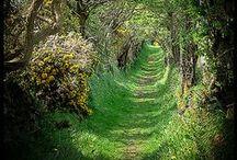 TRAVEL -- Ireland