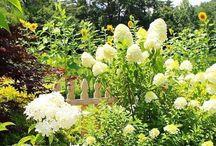 Gardens Galore / Gardens Galore Link Party