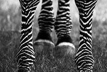 Animales <3