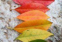 Fall Inspiration / by PicMonkey
