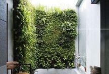 Nature / Plants / Plants / Growing / Nature