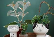 Home Garden & Cactus / Un coin de verdure chez vous !