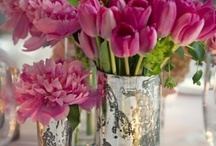 flowers, indoor plants