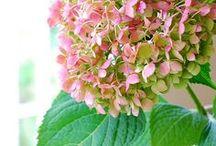 Flowers / by Michaela