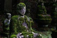 garden / by Susan Scott