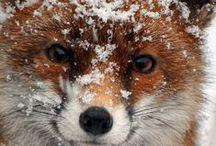 ANIMALS / by Mel Hookham